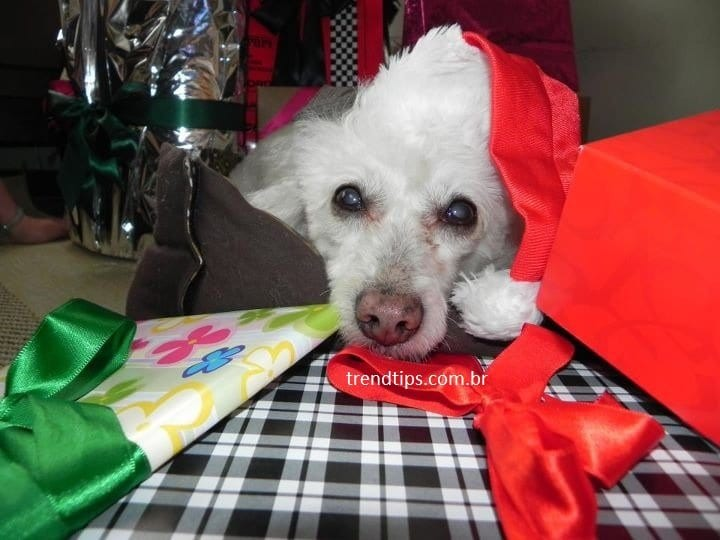 Natal Trend Tips 2012 Feliz Natal!
