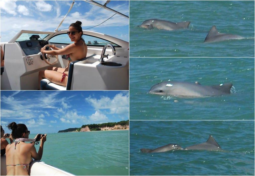 Golfinhos-paia-de-pipa-rn
