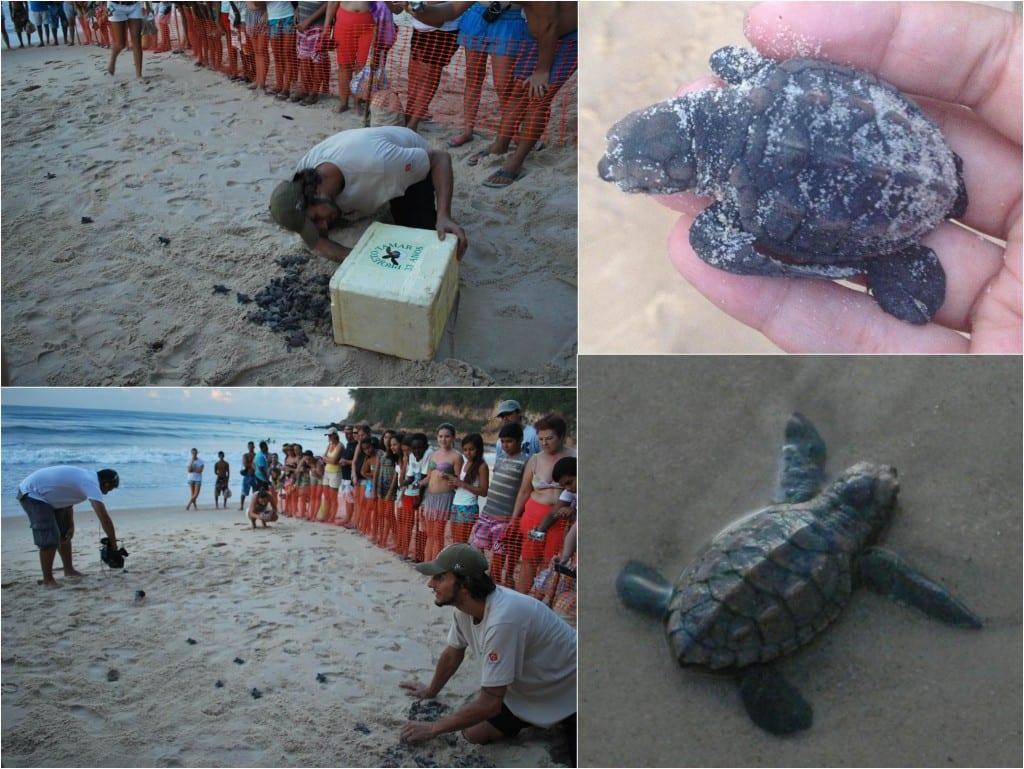 Soltura-tartarugas-projeto-tamar-pipa-rn