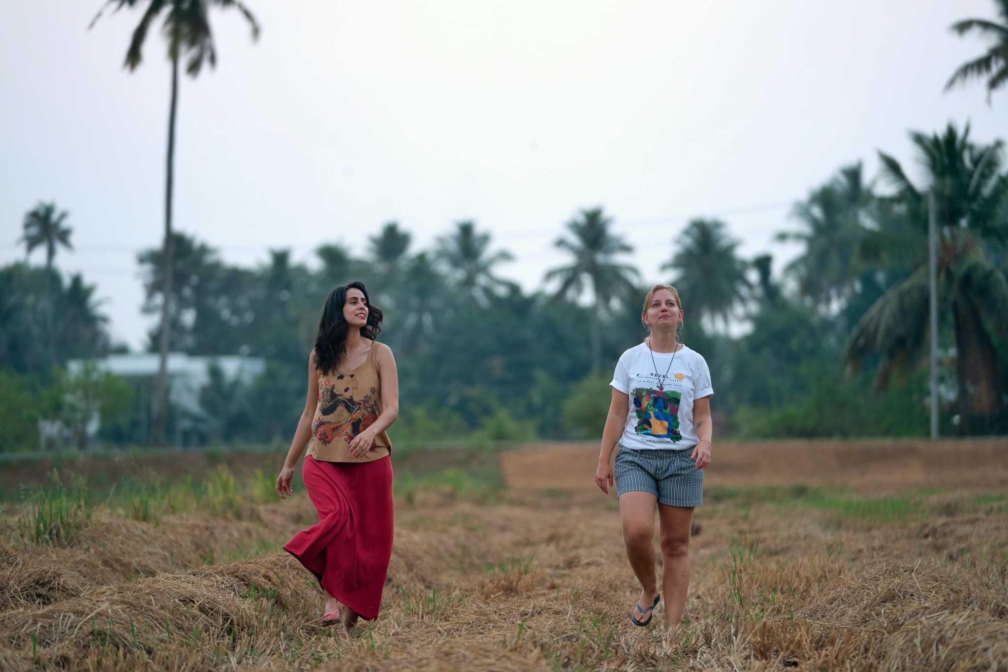 Plantações de Arroz, Kerala, Índia