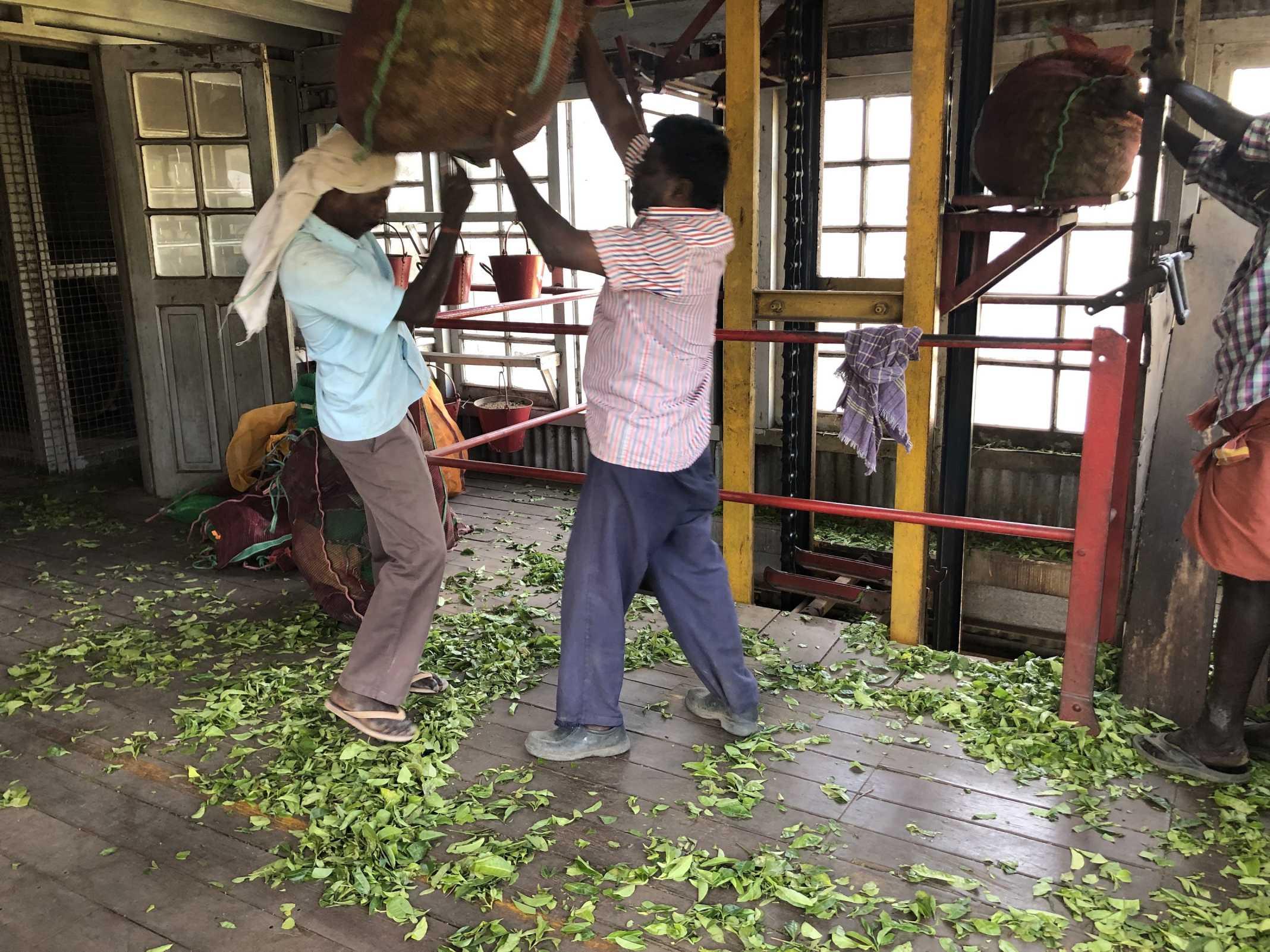 Fábrica chá na índia