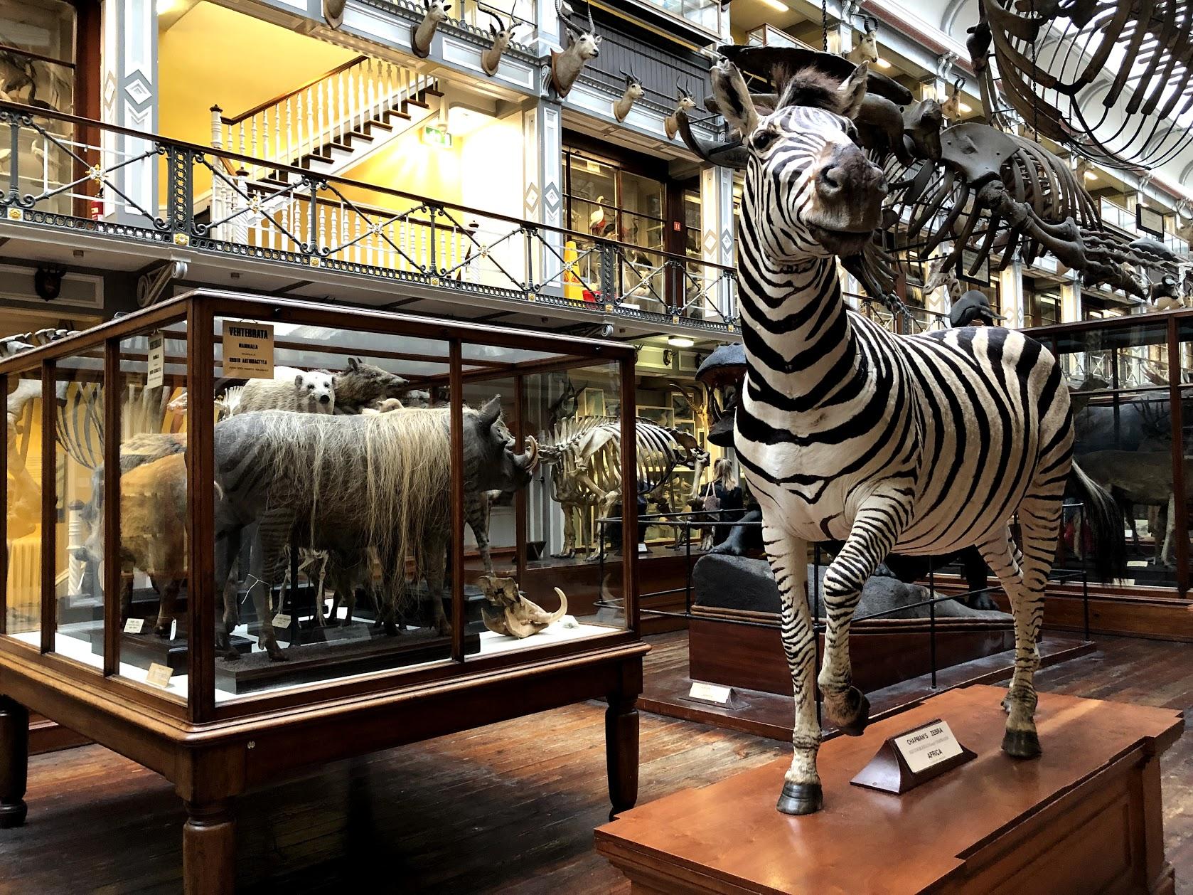 Museu de história natural, Dublin