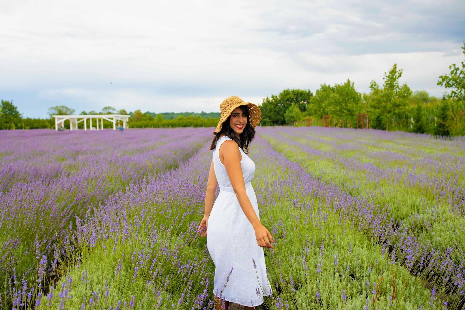 Lavender Farm Oradea Romania