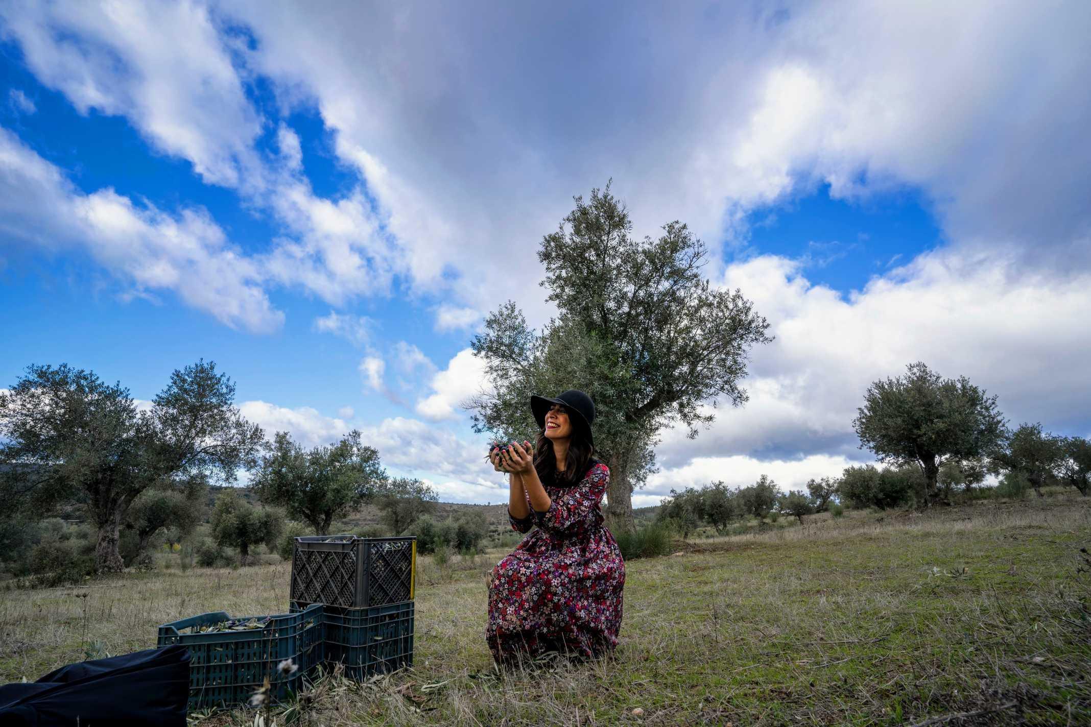 Plantação de Azeitonas Portugal