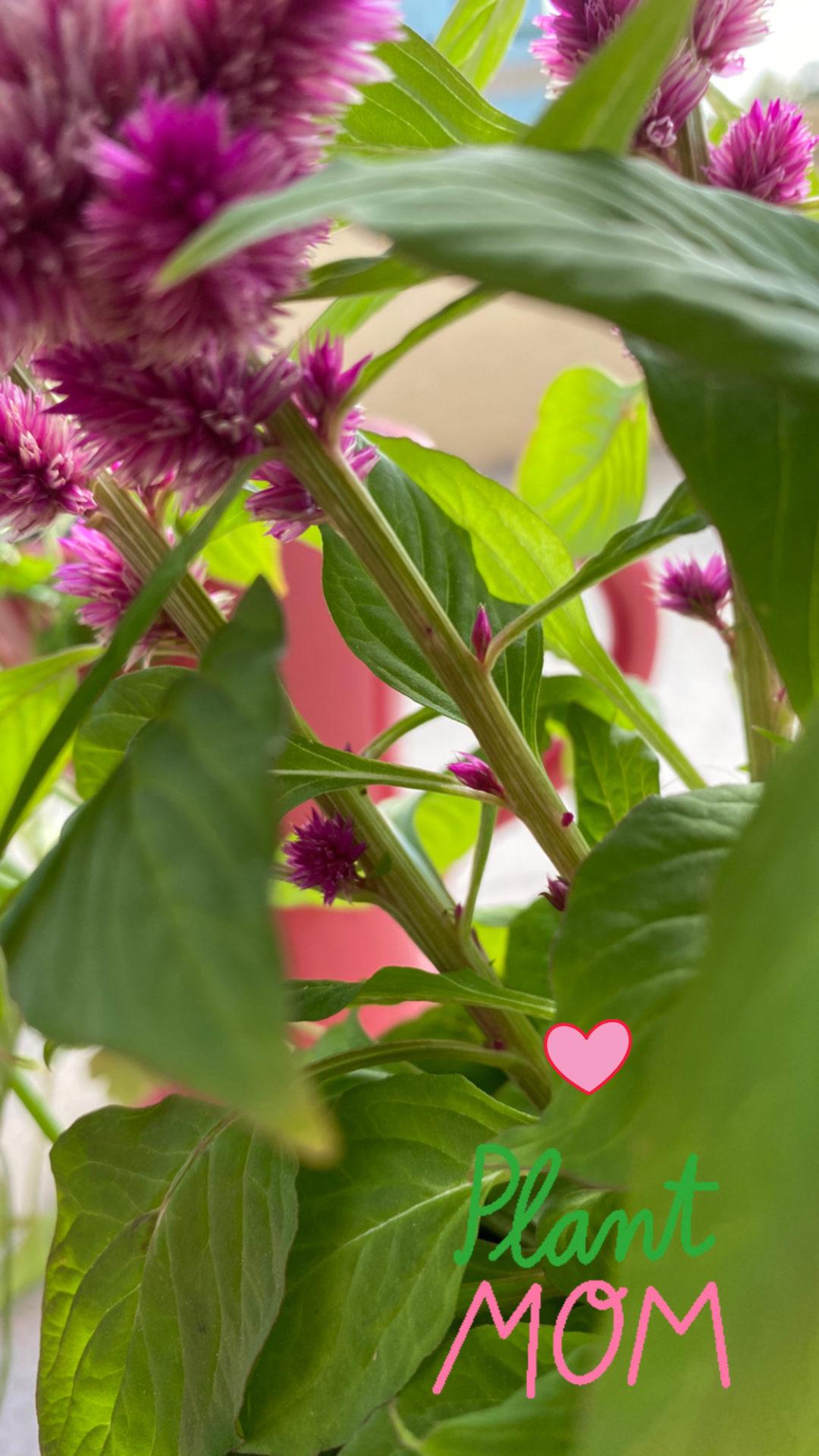 flores quarentena
