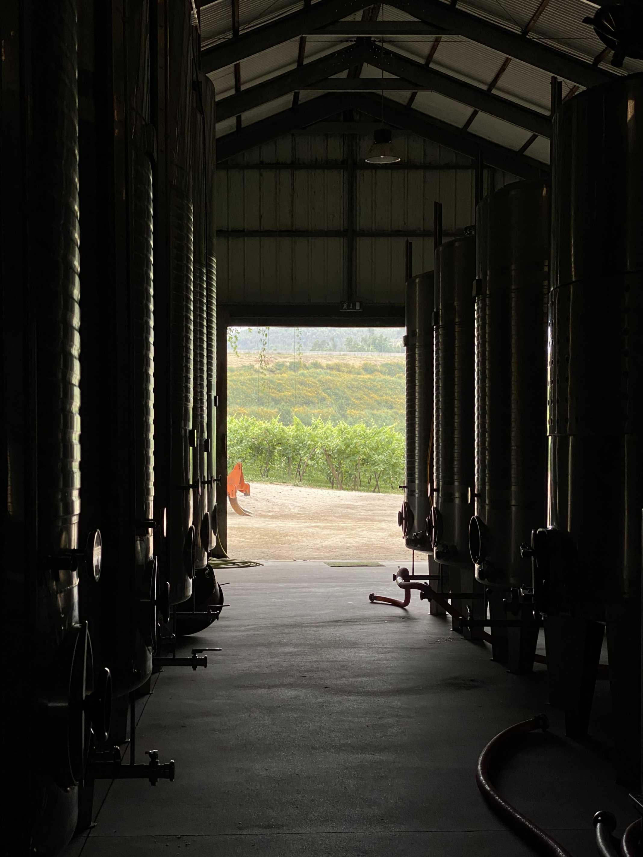 adega vinho verde