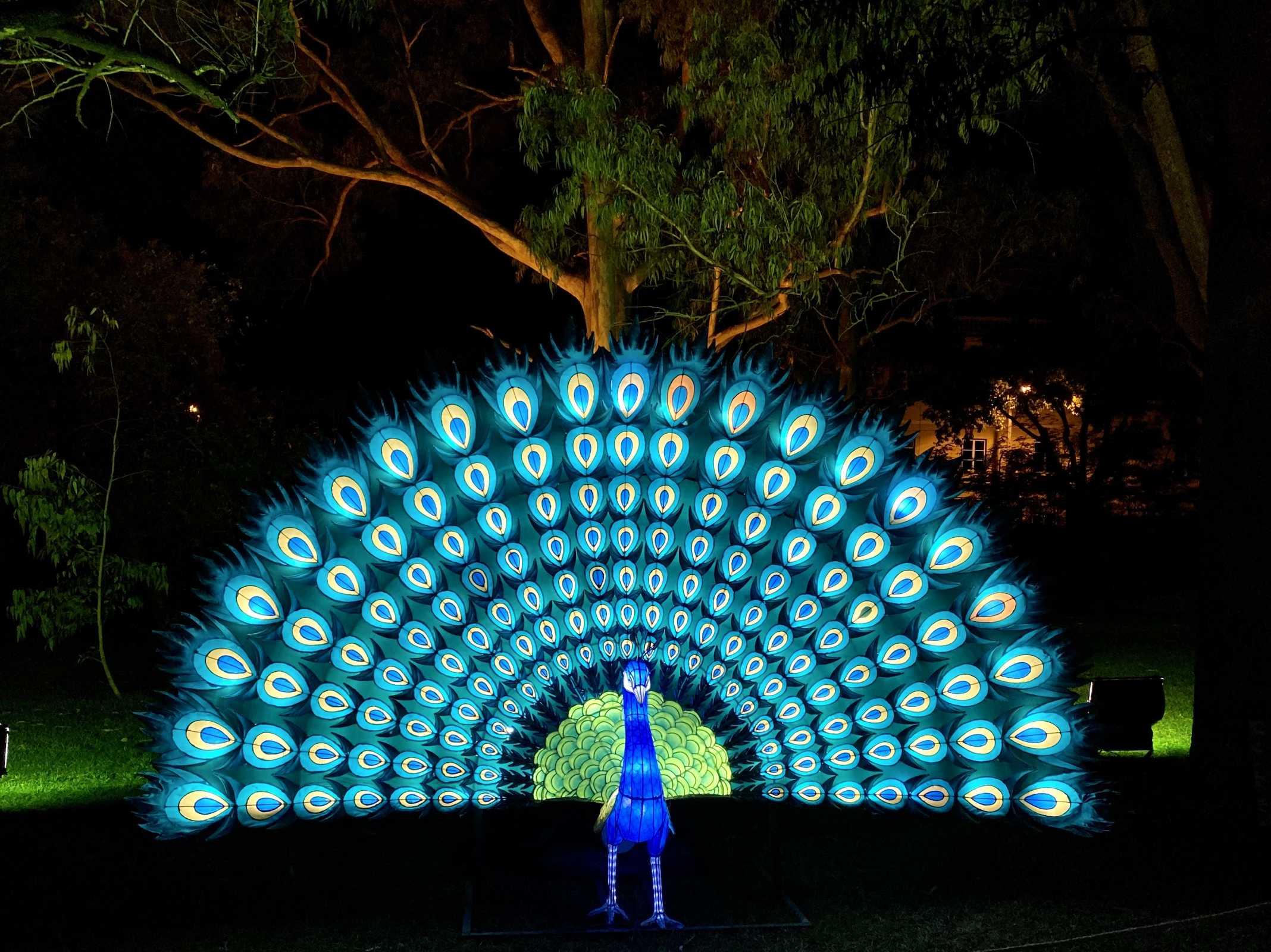 evento luzes belem