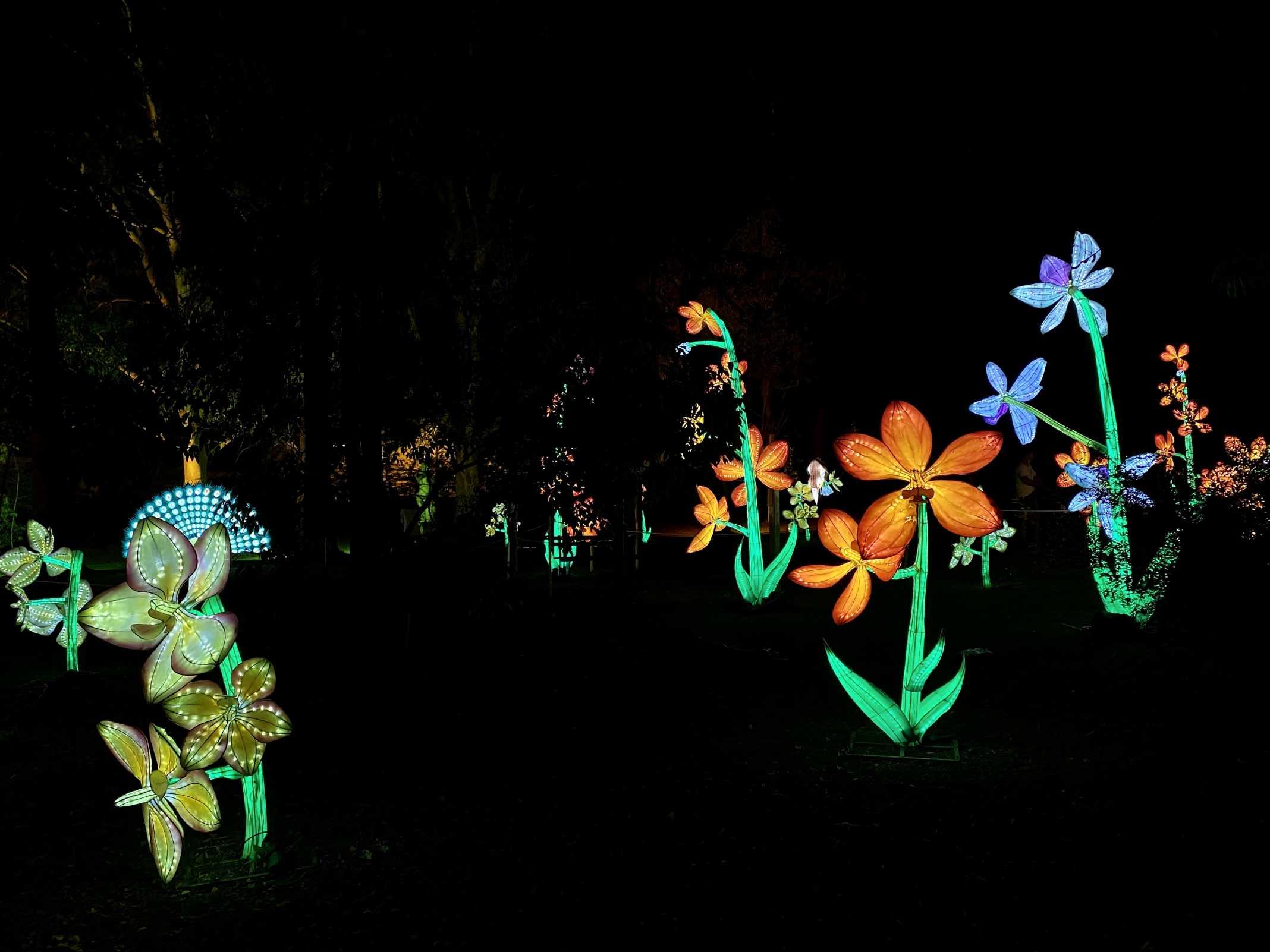 evento luzes portugal