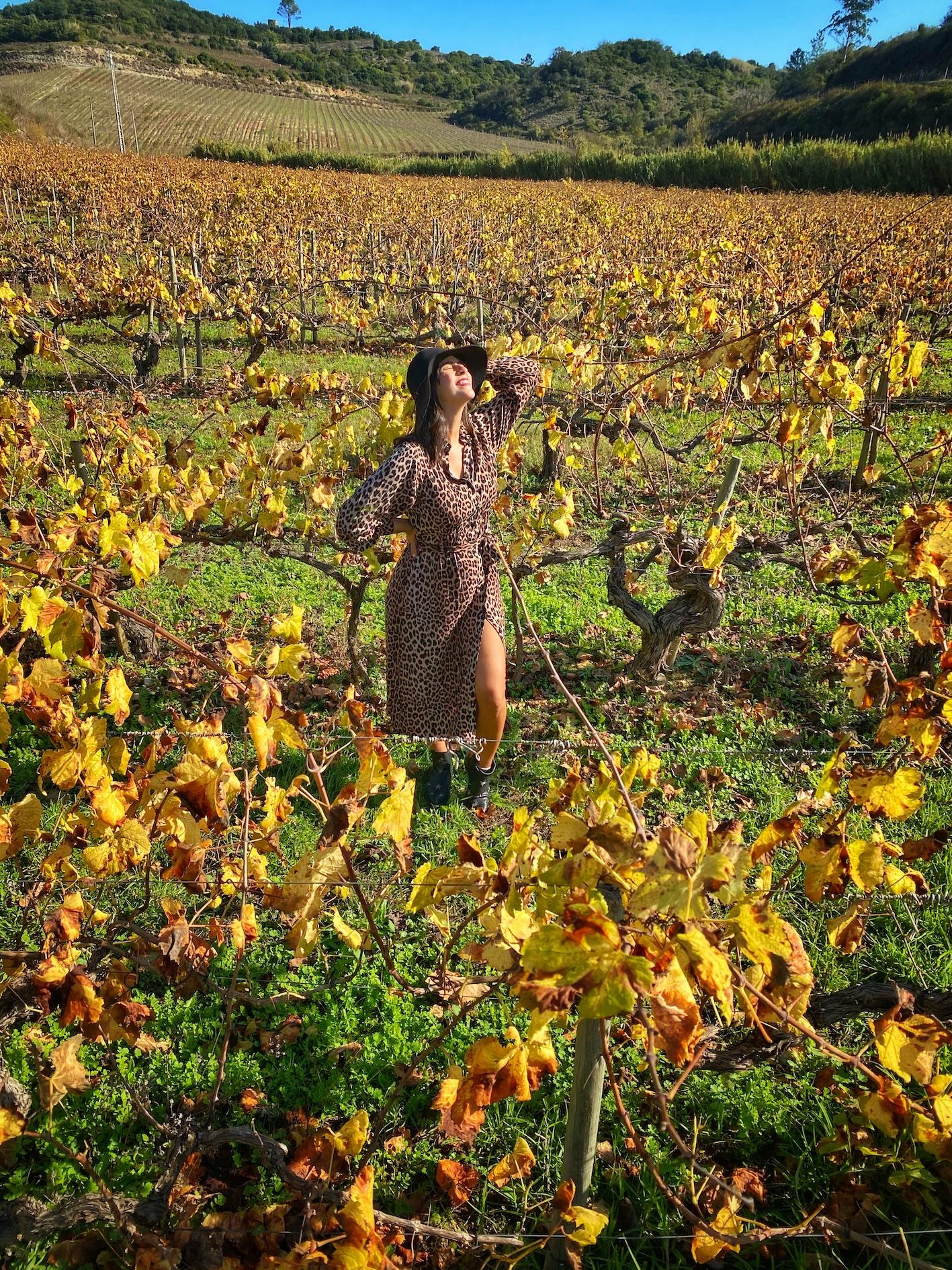 vinhos de lisboa