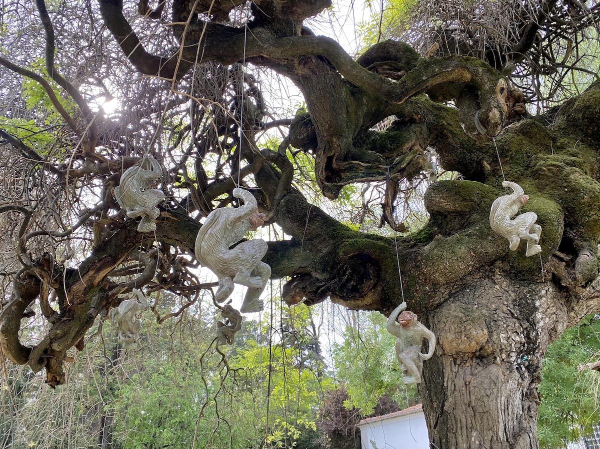 macacos bordallo pinheiro