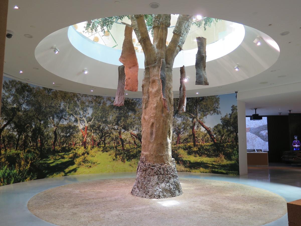 wow museu cortiça