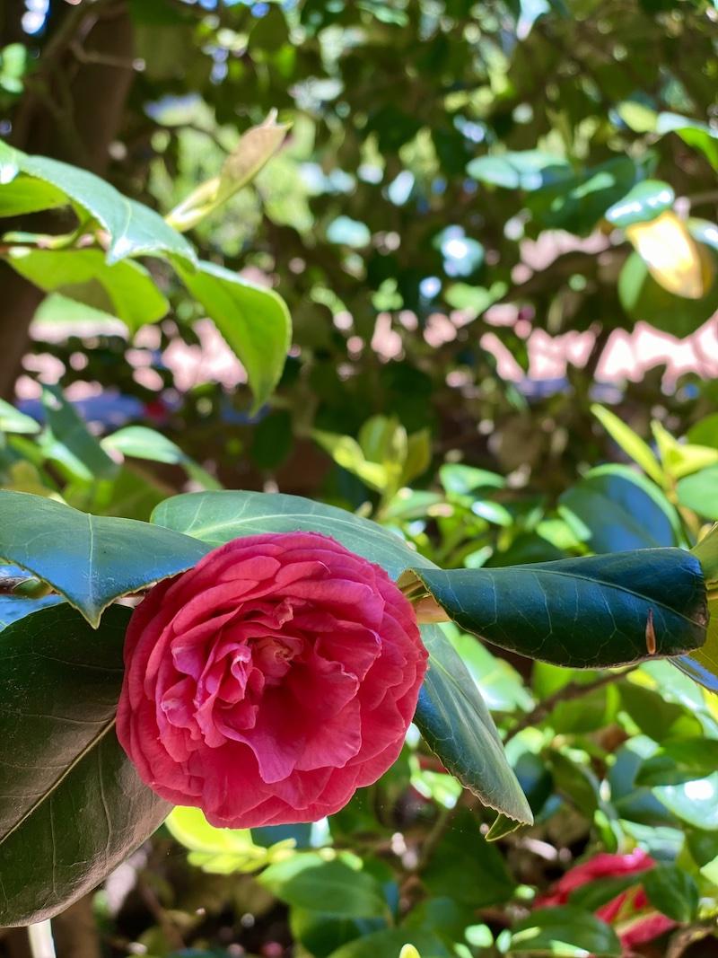 serralves portugal jardim